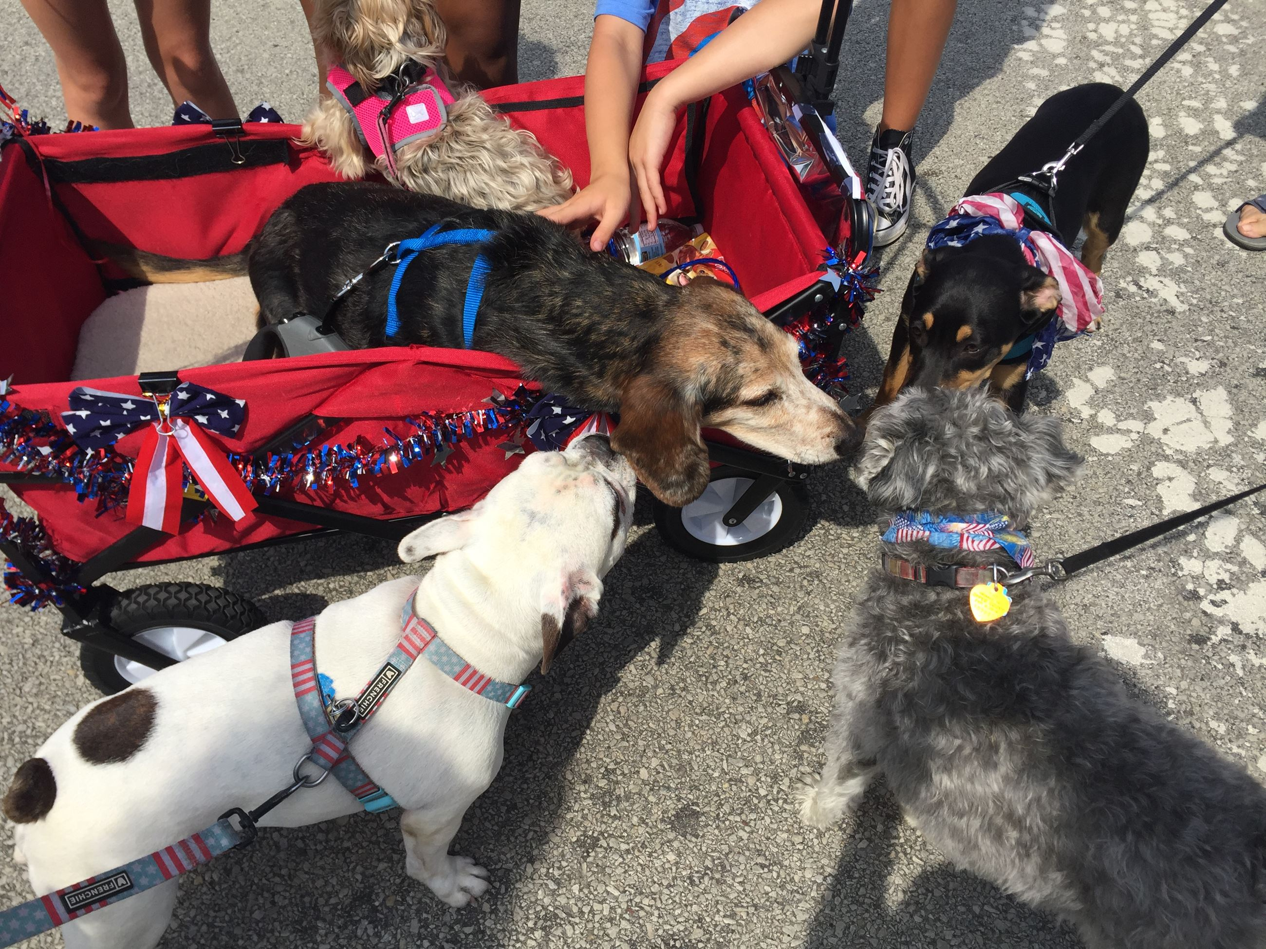 Dog Parade Photo - July 2017